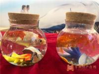 水族微景观DIY活动